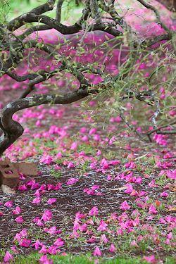 Petals on a path