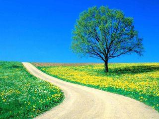 Beautiful Road