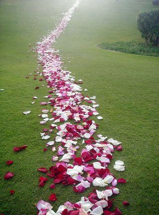 Petals on pathway